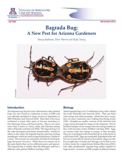 Bagrada Bug: A New Pest for Arizona Gardeners