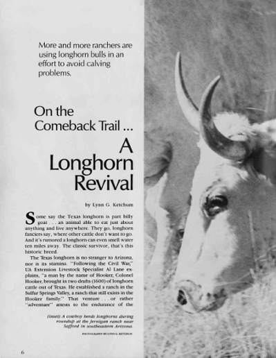 On the Comeback Trail   A Longhorn Revival
